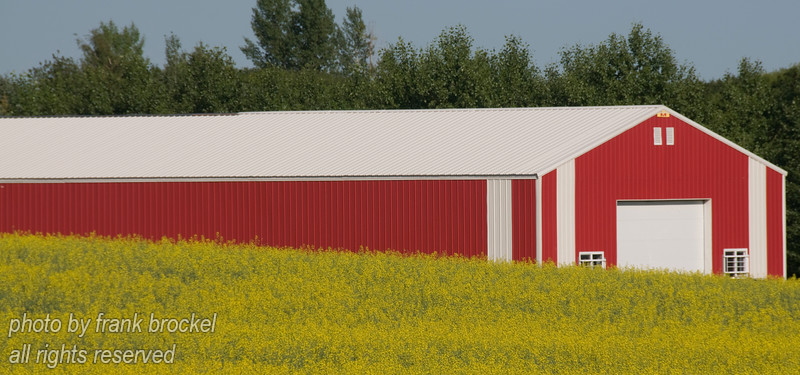 A farm shed near a bright yellow Canola field.