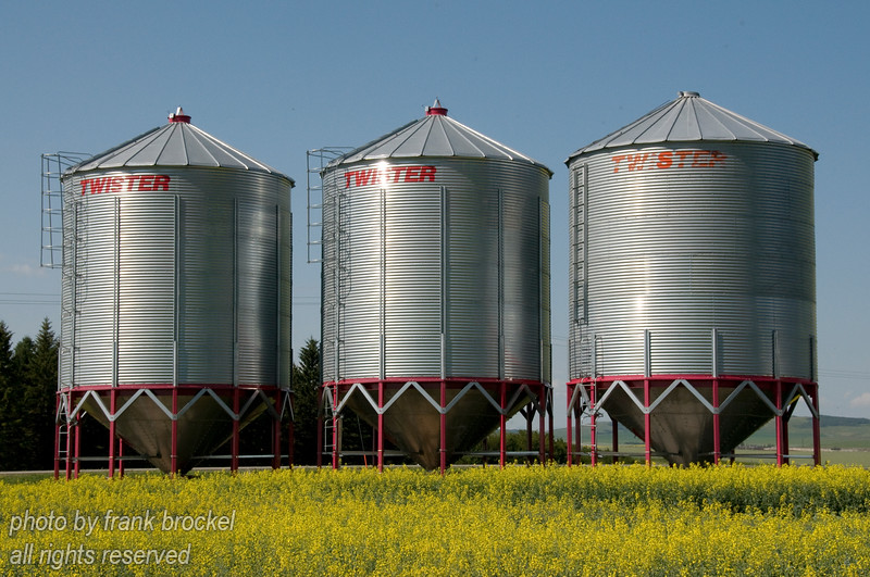 Grain silos in a Canola field.