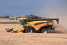 A combine harvesting on a beautiful fall day in Alberta