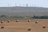 Hay bales in a field - wind turbines near Pincher, Alberta