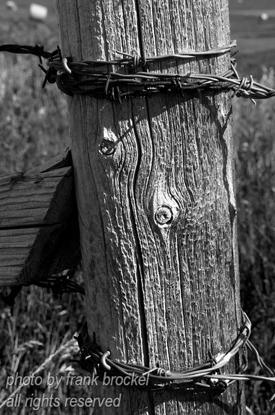 Barbed wire on a fence post - in b&w