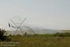 Irrigating fields in Southern Alberta