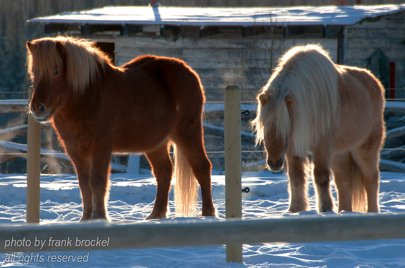 A couple of ponies in the Foothills of Alberta near Benchlands