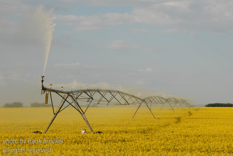 Irrigating a field of Canola in Southern Alberta