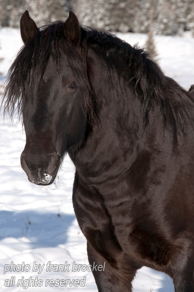 A Horse in the Foothills of Alberta near Benchlands
