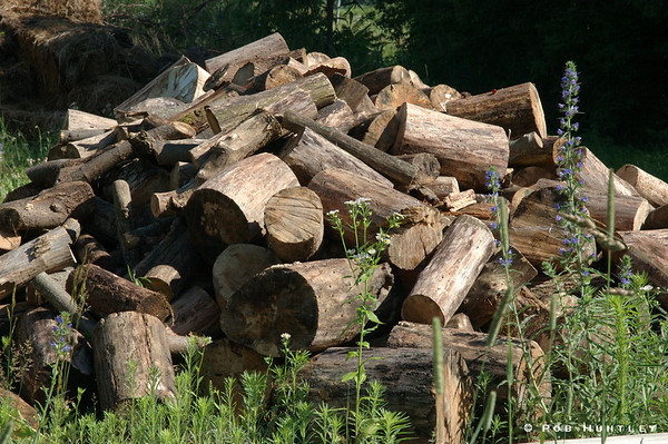 Woodpile in the corner of a field on a country property in Ontario.  © Rob Huntley