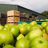 Fresh apple crop