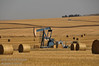 A pump jack in a field east of Kindersley, Saskatchewan
