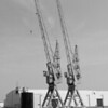 Figee cranes.