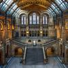 Natural History Museum, London (November 2012)