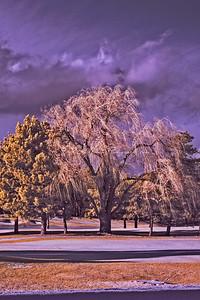 Golf Tree-4