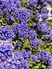 Raspody In Blue