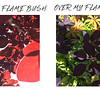 Flame Bush Under and Over