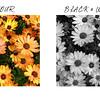 Colour Black&White