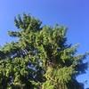Blue Sky Contemplation