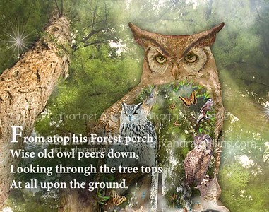 owl_SHAPE_bg_page12