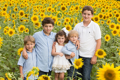 stalveysunflowers-3