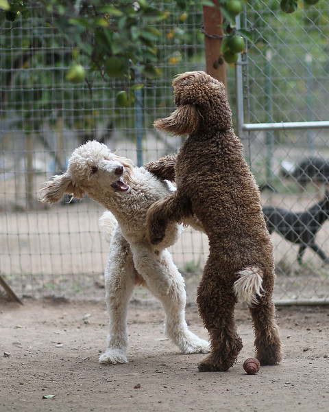 "<b><font size=""4"">All Dogs Rule Daycamp & Sleepovers, Fillmore CA</font></b><br>  All Dogs Rule is a cage free boarding facility. Karen and Russ live on the property and the dogs are cared for 24/7.   Friendly dogs are placed into groups of 2-4 dogs and get to play together all day.  We have a variety of runs and areas for the dogs to sleep and play.  Our main area is a converted horse barn that consists of 7 12' x 15' rooms that open onto individual play yards that are 15' x 30'.  There are several larger yards amongst the orange trees that range in size from 40' x 40' to 40' x 80'.  For small dogs or dogs that are not friendly we have covered 10' x 10' kennels and 4' x 10' dog runs. We can accommodate dogs that do not play well with others.  For more information or to make a reservation please visit our web site at www.alldogsrule.com"