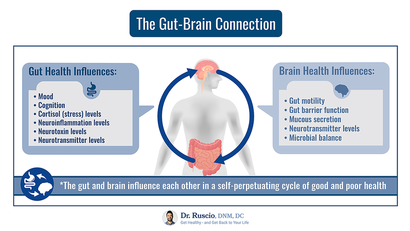 Healthy Gut, Healthy Brain: How to Use Mood Boosting Probiotics - The%20Gut Brain%20Connection Landscape L