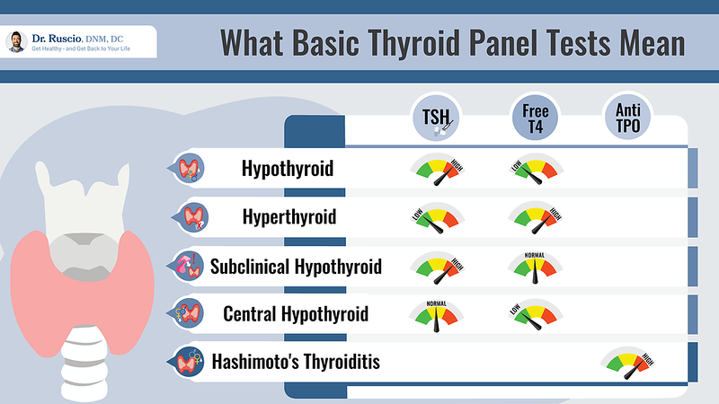 Meaning of thyroid panel tests infographic by Dr. Ruscio