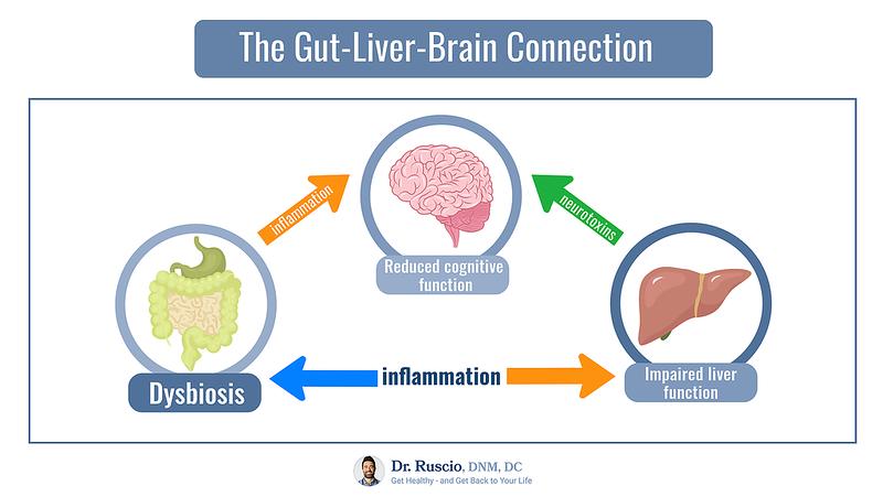 How to Improve Cognitive Health: Focus on Your Foundation - The%20Gut Liver Brain%20Connection Landscape L