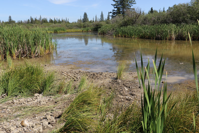 """8  Note the absence of Cattails (bullrushes)  at the debris flow There are none standing and none """"knocked down"""" in the debris flow.How old ? How many flows ? Yves Dansereau"""