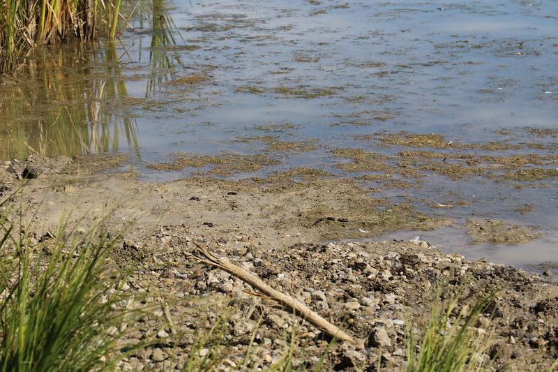 4 mud leaching in pond Yves Dansereau