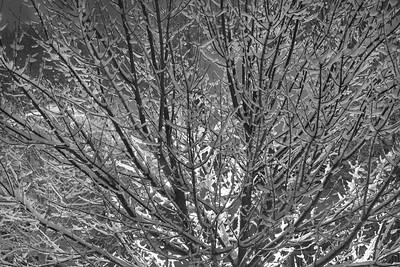 Tree Backlit by a Streetlamp