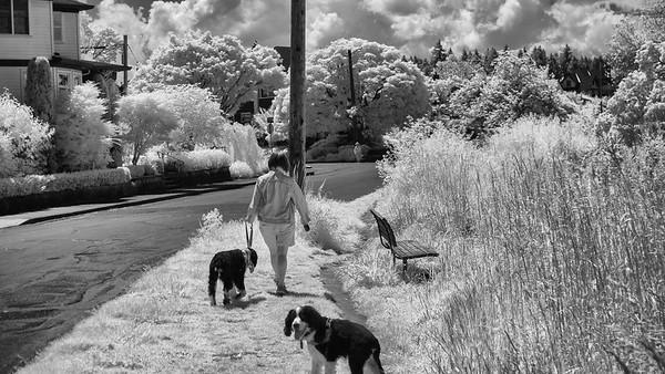 walking the dogs in sellwood oregon