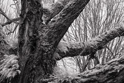 powerful tree