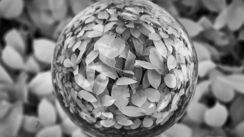 laurel through a crystal ball