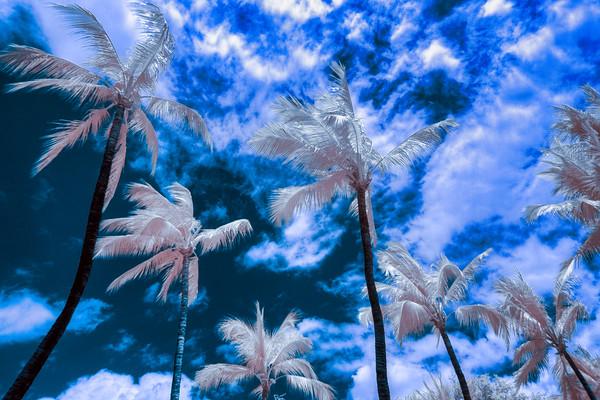 Blue Palms