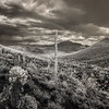 A Desert Rainbow in infrared black and white