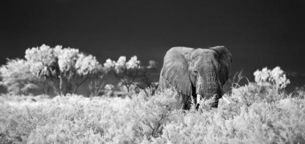 Infrared Kenya 2013