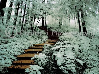 Forrest Steps  #010