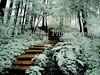 Forrest Steps 10