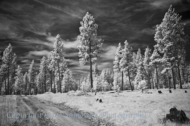 6-9-13 Country Road, Blue Mountains, Oregon. Infrared