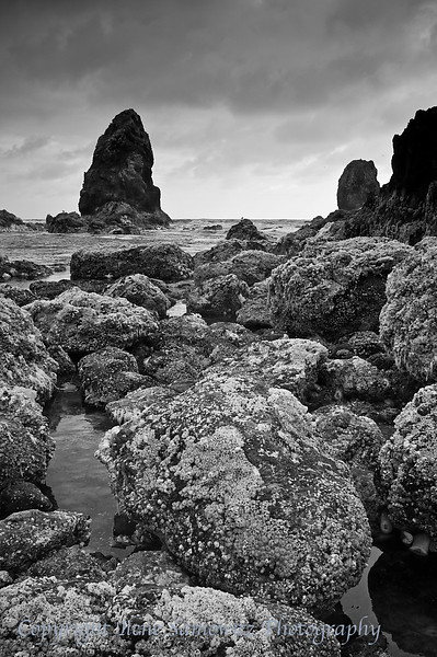 Cannon Beach Tidepools, Oregon