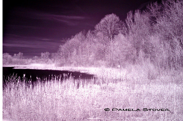 Infrared<br /> Nature<br /> © Pamela Stover<br /> Exposed Images Photography