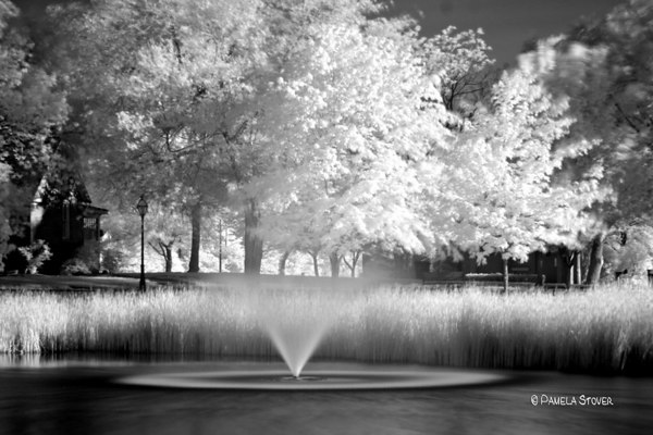 Black & White Infrared<br /> © Pamela Stover<br /> Exposed Images Photography