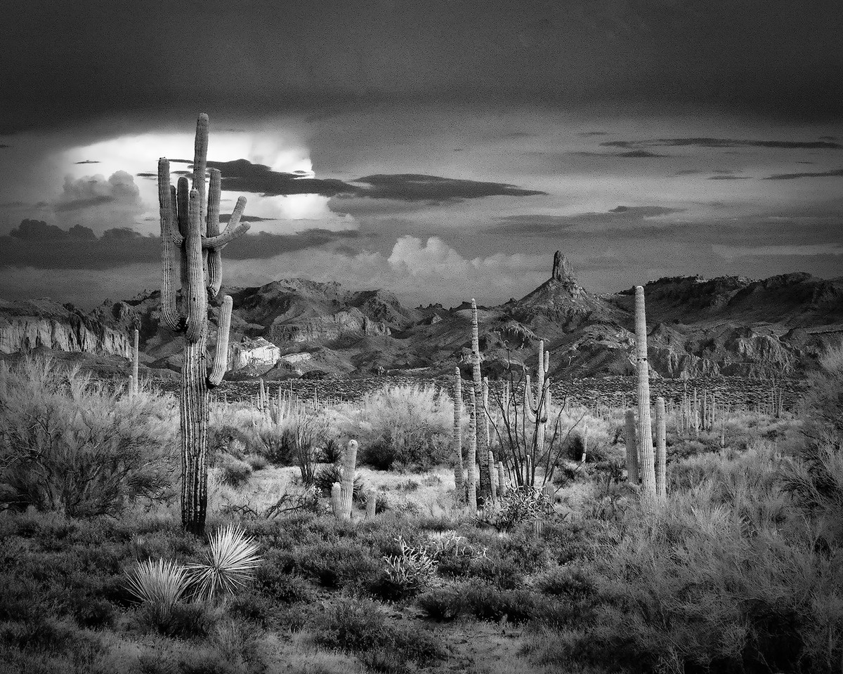 Saguaros, Storm Clouds and Weavers Needle