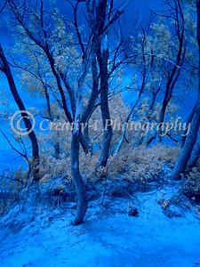 Sleeping Bear National Lakeshore- Infrared #064