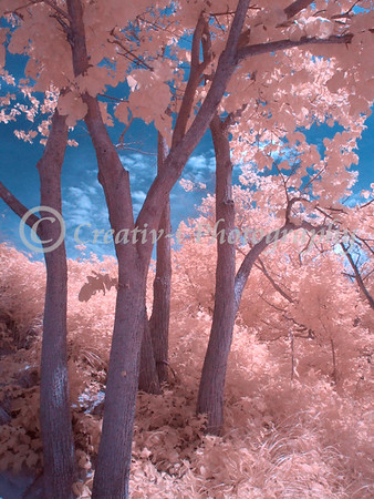 Infrared #71