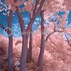 Infrared #71