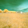 D. H. Day Farm, Infrared