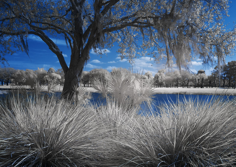 Infrared: Tree with spiky plants