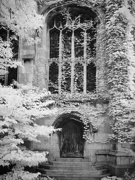 Ivy at the University of Chicago
