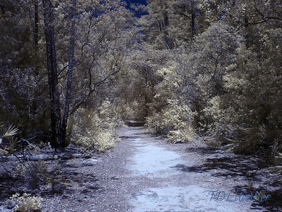 Salt Springs Recreation area, Ocala National Forest, Ocala Florida