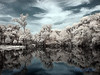 Lake @  Pioneer Park,  Zolfo Springs Florida