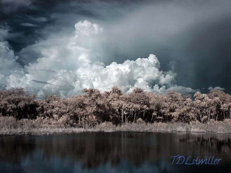 Terra Ceia Preserve, Rubonia Florida